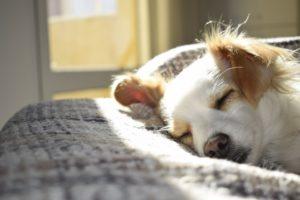 dog sleeping sleep