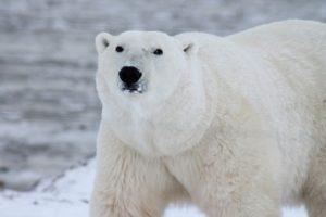 can polar bear plunge help with dementia